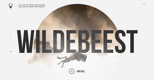 Wildebeest -let's get wild!